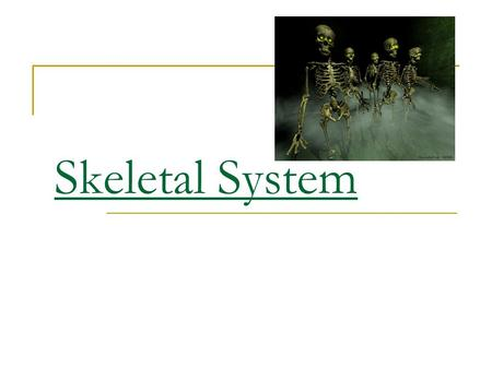 Skeletal System Skeletal System Functions Provides shape and support. Video Notes Anatomy Skeletal System Support.