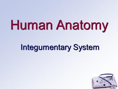 Human Anatomy Integumentary System. Introduction Largest organ of the bodyLargest organ of the body 21 square feet, 1.5-2 square meters21 square feet,