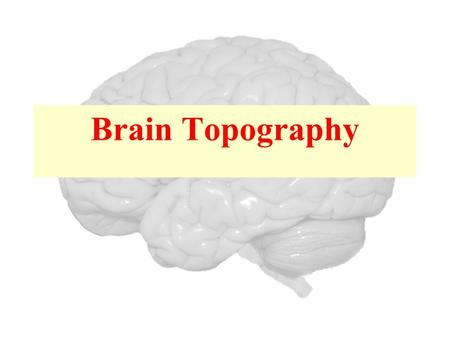 Brain Topography.