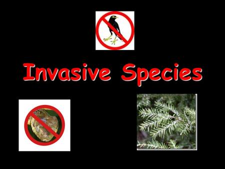 Invasive Species.