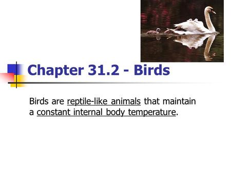 Chapter 31.2 - Birds Birds are reptile-like animals that maintain a constant internal body temperature.