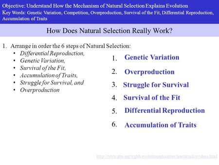 How Does Natural Selection Really Work?