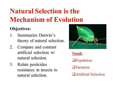Natural Selection is the Mechanism of Evolution Objectives: 1.Summarize Darwin's theory of natural selection. 2.Compare and contrast artificial selection.