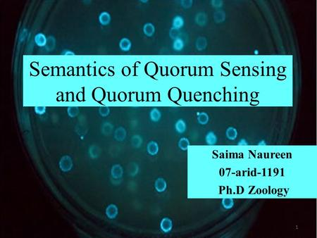 Semantics of Quorum Sensing and Quorum Quenching