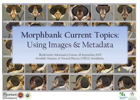 Morphbank Current Topics: Using Images & Metadata Biodiversity Informatics Course, 18 September 2009 Swedish Museum of Natural History (NRM), Stockholm.