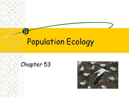 Population Ecology Chapter 53. turtles Population Groups of individual of the same species that live in the same place Characteristics of populations.