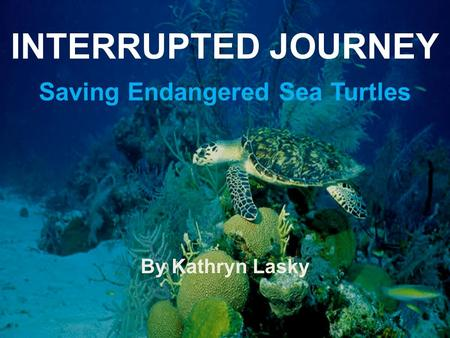 INTERRUPTED JOURNEY Saving Endangered Sea Turtles By Kathryn Lasky.