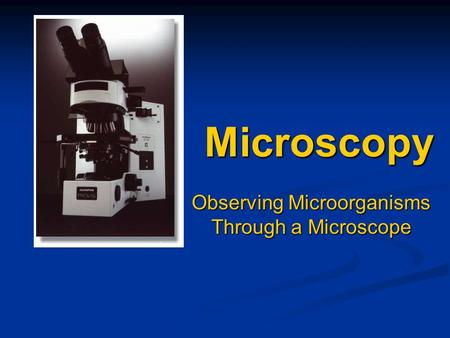 Microscopy Observing Microorganisms Through a Microscope.
