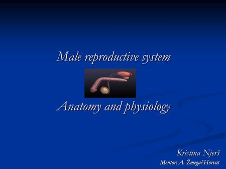 Male reproductive system Anatomy and physiology Kristina Njerš Mentor: A. Žmegač Horvat.