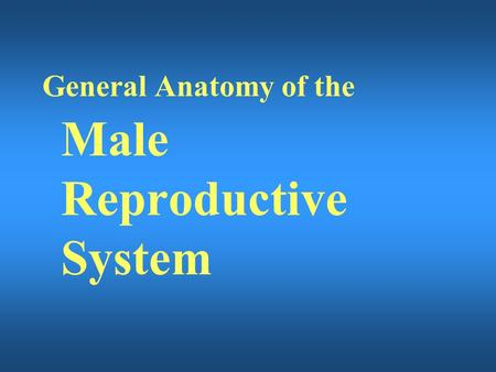 General Anatomy of the Male Reproductive System.
