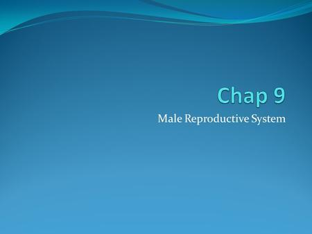 Male Reproductive System. Function The male reproductive system functions to produce sperm and transfer the sperm into the female reproductive organs.