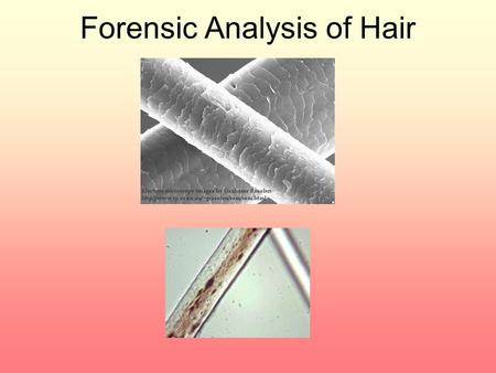 Forensic Analysis of Hair. How useful is hair in a forensic investigation? Used to back up circumstantial evidence and help place individuals at the crime.