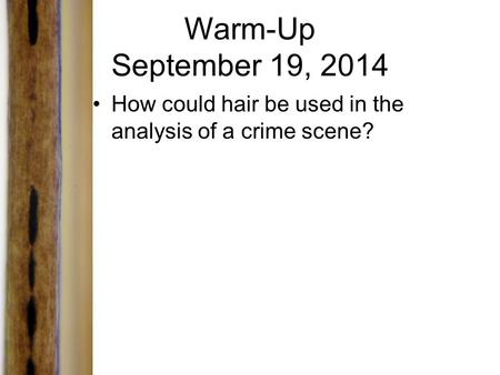 Warm-Up September 19, 2014 How could hair be used in the analysis of a crime scene?