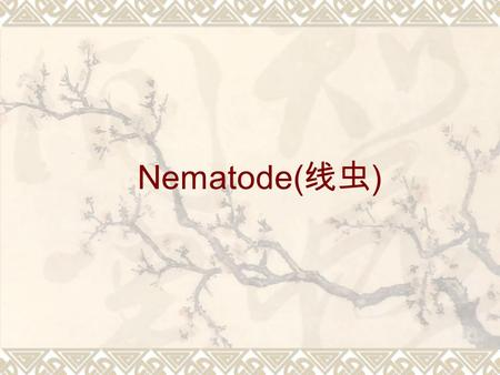 Nematode( 线虫 ). Round Worms Introduction  Among the commonest of all parasites and responsible for diseases of major importance in humans  Non-segmented.