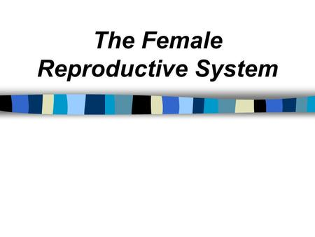 The Female Reproductive System. The Ovum Ovum = The female repro. cell. Plural = Ova.