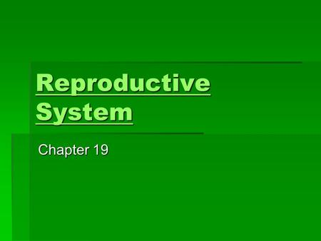 Reproductive System Reproductive System Chapter 19.