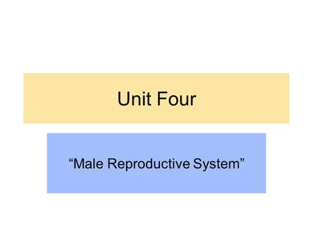 "Unit Four ""Male Reproductive System"". Human Reproductive System Origin The organs that allow males and females to reproduce come from one of three germ."