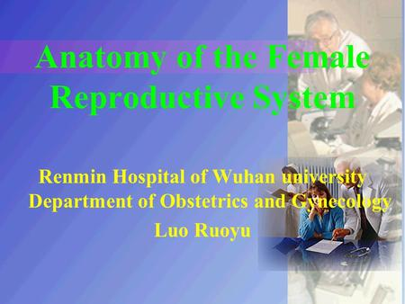 Anatomy of the Female Reproductive System Renmin Hospital of Wuhan university Department of Obstetrics and Gynecology Luo Ruoyu.