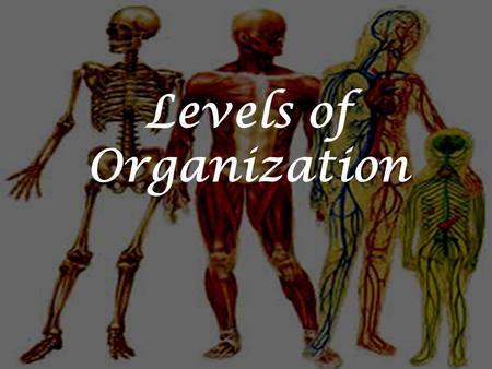 Levels of Organization. Objective: Relate an organ to its parts and the larger system it is a part. Essential Question: How does the body work together?