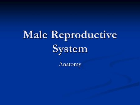 Male Reproductive System Anatomy. Ground Rules Respect what other people say; no put-downs Be sensitive to other people's feelings Not answering a question.