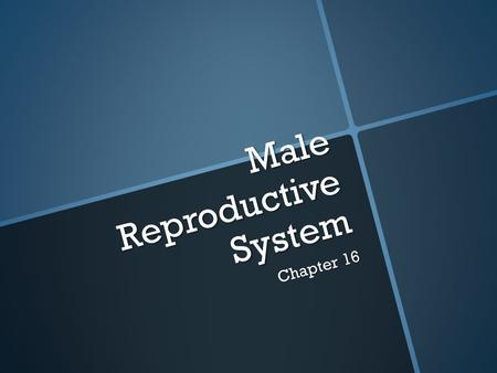 Male Reproductive System Chapter 16. Function of the Male Reproductive System  To produce sperm cells (male reproductive cells)  Begin producing sperm.