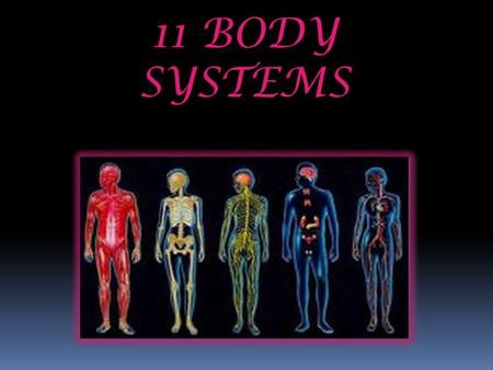 11 BODY SYSTEMS. Skeletal System Provides Shape and structure to the body. Allows for movement. Protects vital organs. Produces blood cells. Stores minerals.