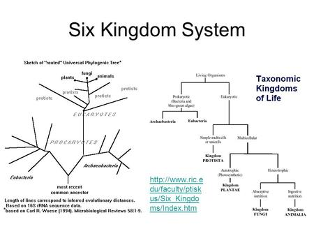 Six Kingdom System  du/faculty/ptisk us/Six_Kingdo ms/Index.htm.