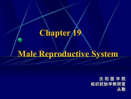 Chapter 19 Male Reproductive System