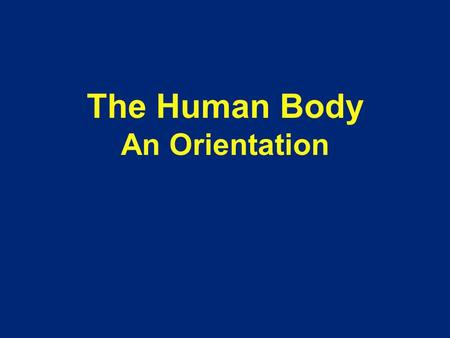 The Human Body An Orientation