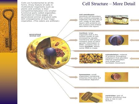 Cell Structure – More Detail. Cellular Biology: A Refresher Anatomy and Physiology 121: Dr. Jaeson T. Fournier.