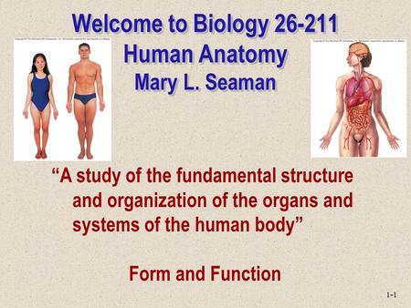 "1-1 Welcome to Biology 26-211 Human Anatomy Mary L. Seaman ""A study of the fundamental structure and organization of the organs and systems of the human."