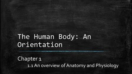 The Human Body: An Orientation Chapter 1 1.1 An overview of Anatomy and Physiology.