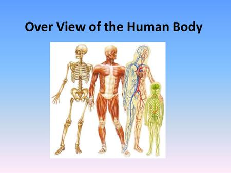 Over View of the Human Body