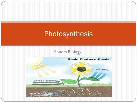 Honors Biology Photosynthesis. What you will learn… 1. How do plants get food? 2. Photosynthesis overview 3. Leaf structure 4. Chloroplast structure 5.