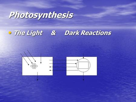 Photosynthesis The Light & Dark Reactions The Light & Dark Reactions Carbon Cycle.