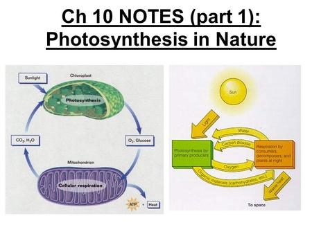 Ch 10 NOTES (part 1): Photosynthesis in Nature