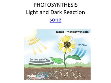 PHOTOSYNTHESIS Light and Dark Reaction song