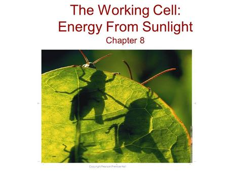 Copyright Pearson Prentice Hall The Working Cell: Energy From Sunlight Chapter 8.