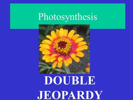 Photosynthesis DOUBLE JEOPARDY MOLECULES MISCELLANEOUS TRUE or FALSELight-Dependent Reactions Reactions Calvin Cycle 200 400 600 800 1000.