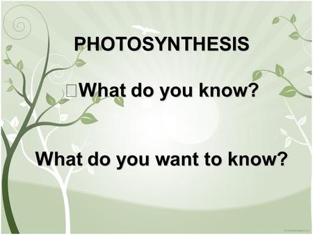 PHOTOSYNTHESIS What do you know? What do you want to know?