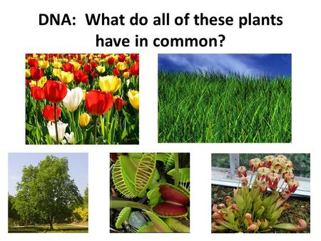 DNA: What do all of these plants have in common?.