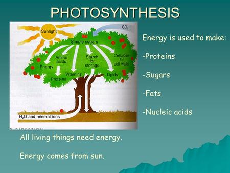 PHOTOSYNTHESIS Energy is used to make: Proteins Sugars Fats