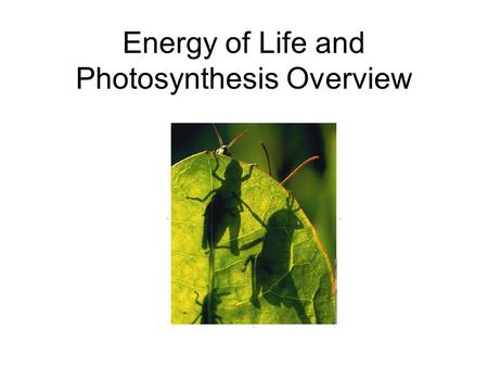 Energy of Life and Photosynthesis Overview. Energy in Living Things Living things need energy to survive. Energy comes in many forms including light,