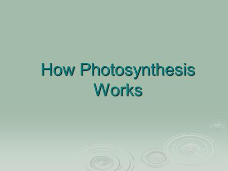 How Photosynthesis Works