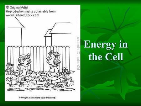 Energy in the Cell.
