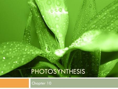 PHOTOSYNTHESIS Chapter 10. PHOTOSYNTHESIS Overview: The Process That Feeds the Biosphere Photosynthesis Is the process that converts light (sun) energy.