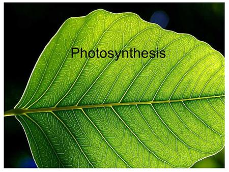 Photosynthesis. 1. Mesophyll A layer of cells that contain & are responsible for most of the plant's photosynthesis chloroplasts Page 2.