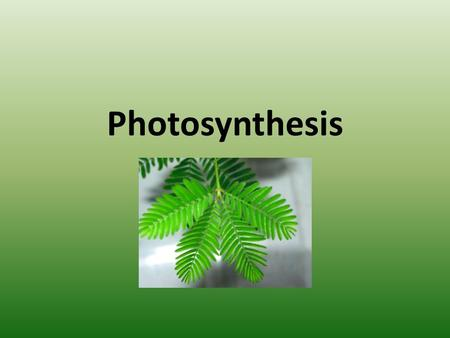 Photosynthesis. What is it? Photo – light Synthesis – to make The process of converting light energy to chemical energy and storing it as sugar.