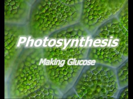 Where does all that glucose come from? CO 2 radiant energy Photosynthesis glucose.