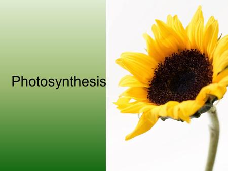 Photosynthesis. Energy for Life What are autotrophs? Why are they important?